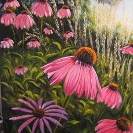 Coneflowers in the Morning